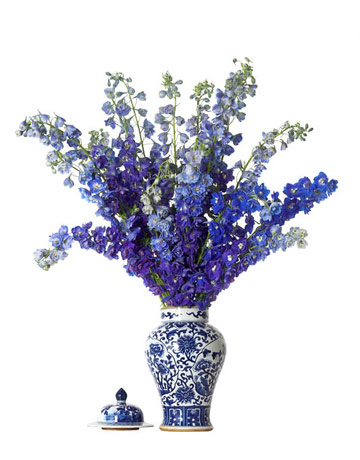GINGER-JAR-+-Delphiniums-Home-Beautiful-Our-Favorie-Flowers-and-Arrangements