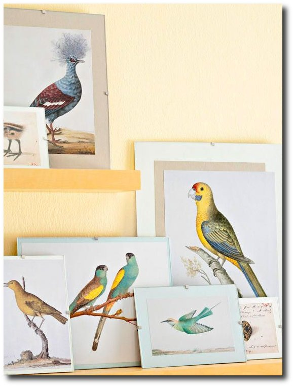 Decorating With Bird Prints