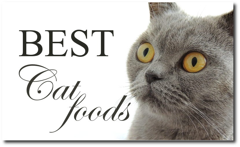 Cat Foods With Gravy High In Carbohydrate