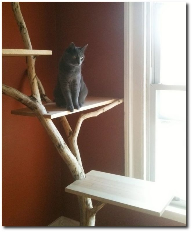 DIY Cat Condo Via Jen Christiansen
