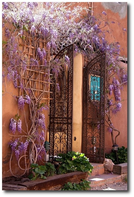 Wisteria entrance, Crete, Greece